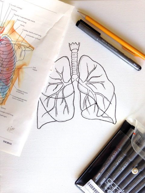 lungs1